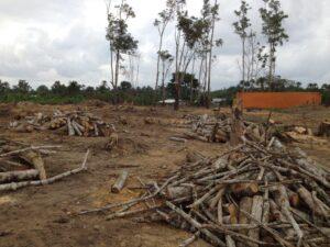 04 Viel Holz zum Kohle machen